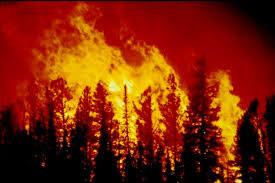 Plusieurs incendies se sont déclenchés mercredi au Mont Châambi à Kasserine suite à une large opération de ratissage au moyen de tirs d'artillerie et de munition