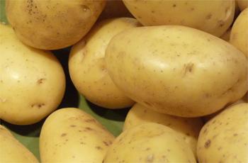 Le ministère du Commerce appliquera dès demain le 12 mars 2015 la nouvelle tarification de la pomme de terre fixé à 980 millimes le kg
