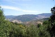 Un dispositif sécuritaire a été renforcé dans la ville de Menzel Jemil (gouvernorat de Bizerte) à la suite du témoignage d'un garde forestier signalant la présence de deux personnes
