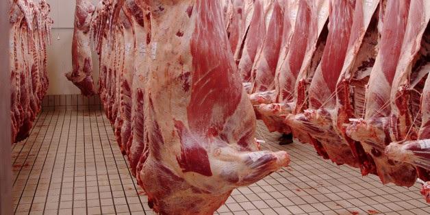 Algérie : Évolution record de la production en viande blanche
