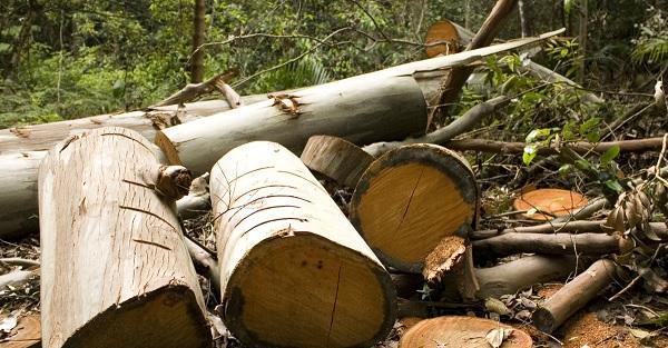Massacre à la forêt de Aïn Draham