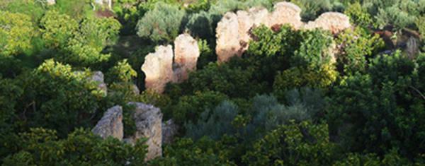 Tunisia agricoltura