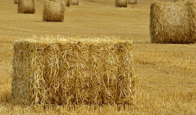 tunisie fourrages agriculture