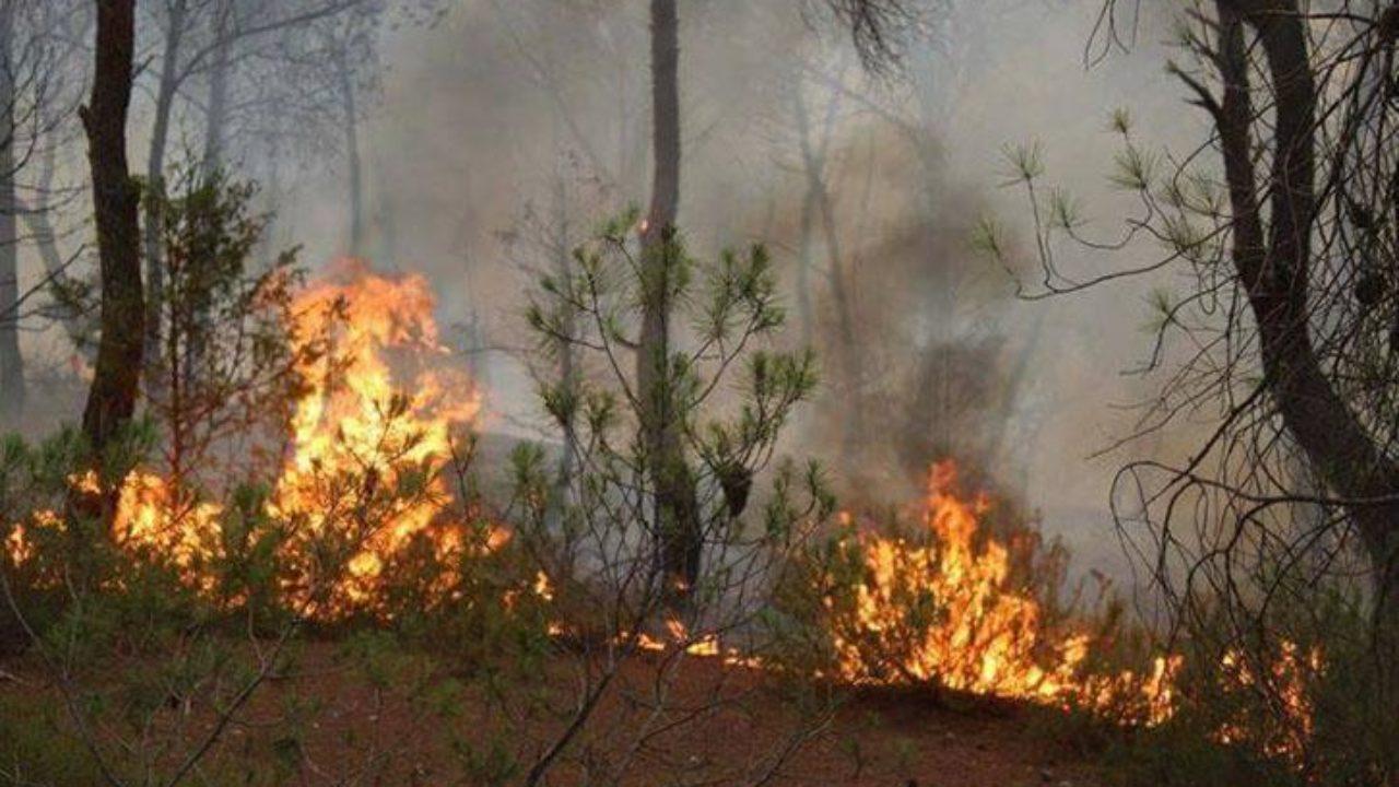 Bizerte: 38 incendies de forêts enregistrés e ...